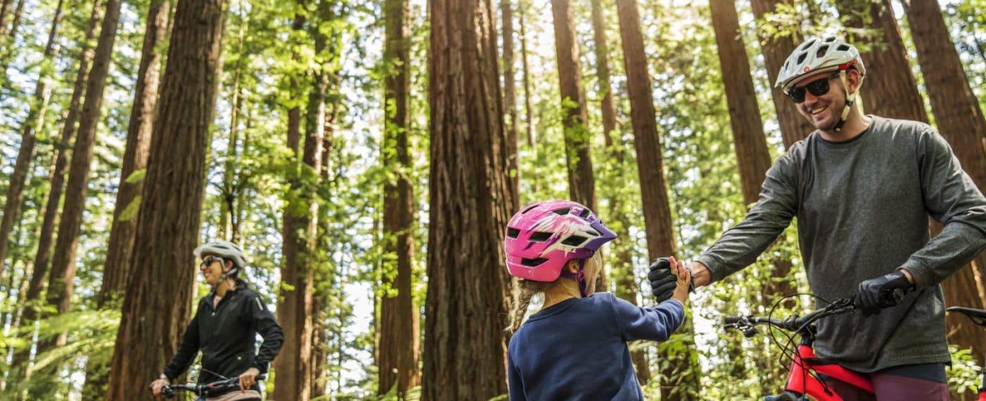 Redwoods Whakarearewa Forest