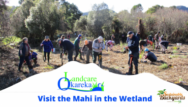 Landcare Okareka: Visit the Mahi in the Wetland
