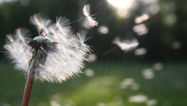 Transform Grief, Love Life
